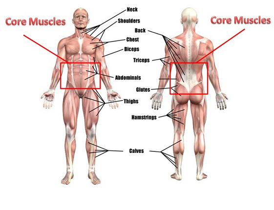 core-muscles-image